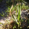 Megindultak a növénykék április 16