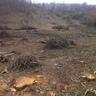 Erdőtisztítás, telepítésre előkészítés