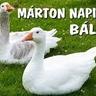 márton bál